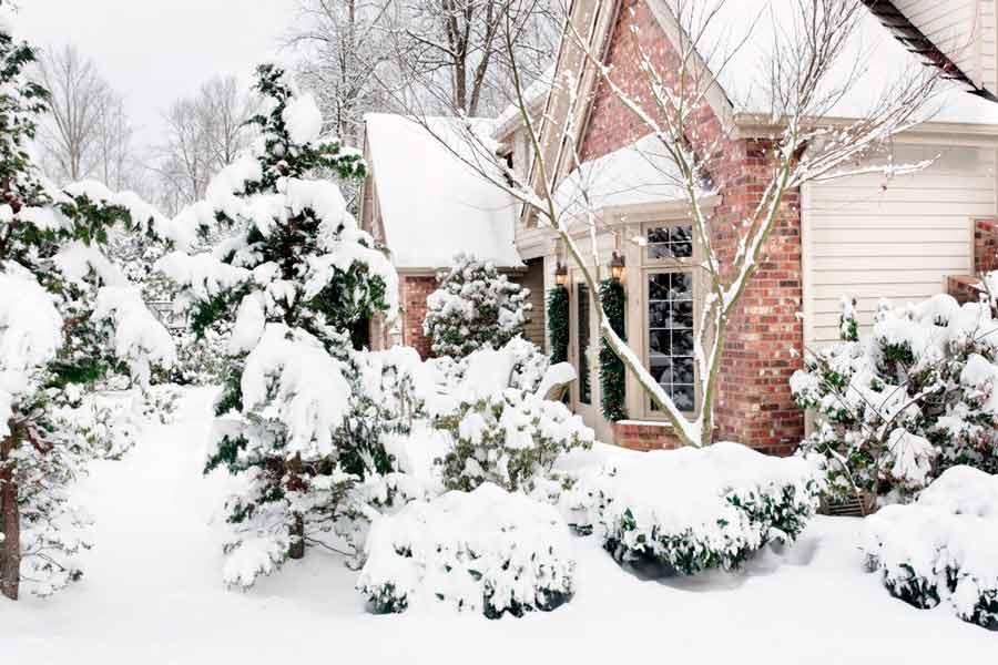 Что сделать в саду зимой?