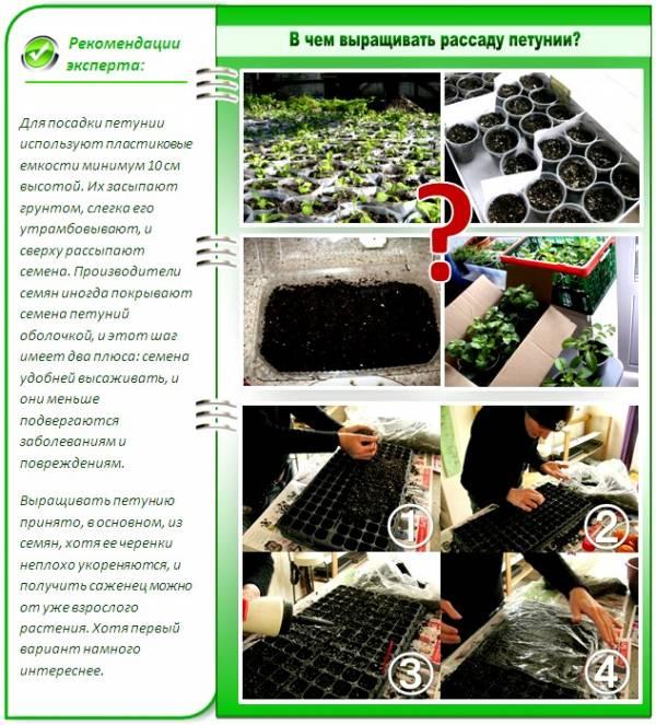 Как приготовить грунт для проращивания семян петунии