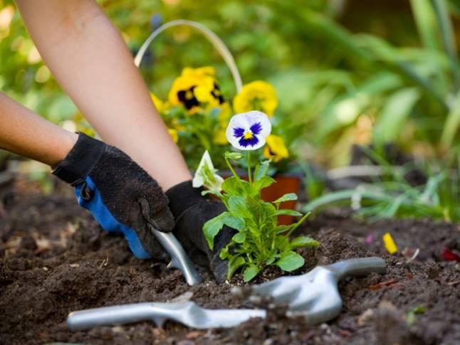Эмоциональная составляющая цветочных растений