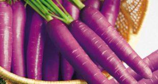 Фиолетовая морковь с необычным вкусом