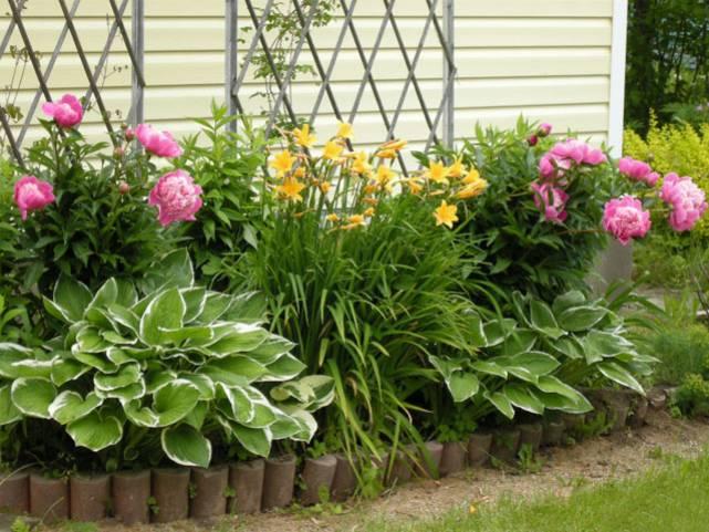 многолетние цветы на клумбе