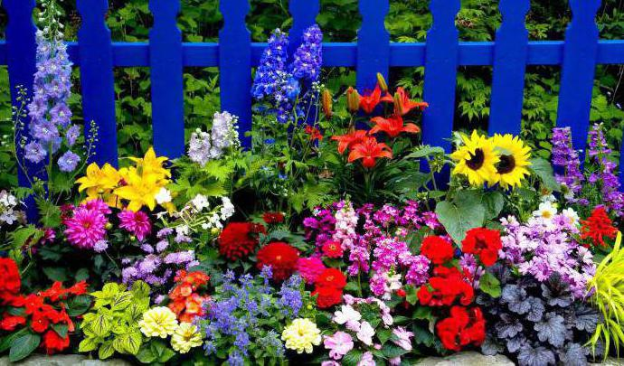Многолетники с красивыми цветами