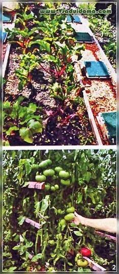 Чтобы помидоры не болели грибковыми заболеваниями