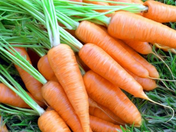 Способ посадки моркови в рейках