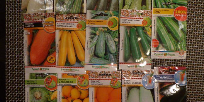 Как правильно посадить кабачки семенами