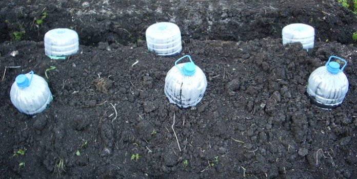 Как сеять семена кабачков для рассады