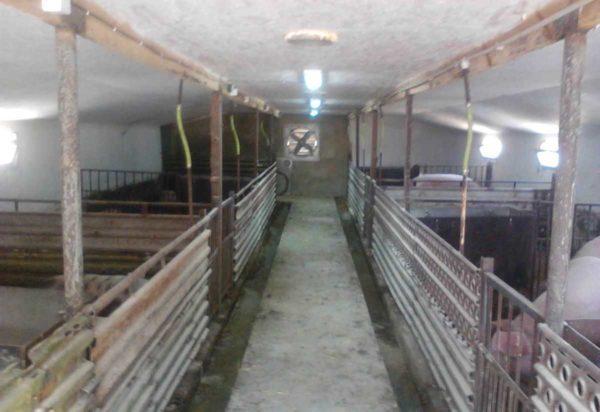 Потолок свинарника