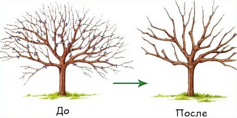 Обрезка деревьев: ее виды и сроки проведения