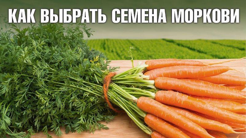 Какие семена моркови лучше выбрать для посадки