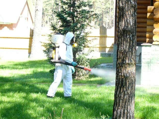 Санитарная обработка дачи от насекомых