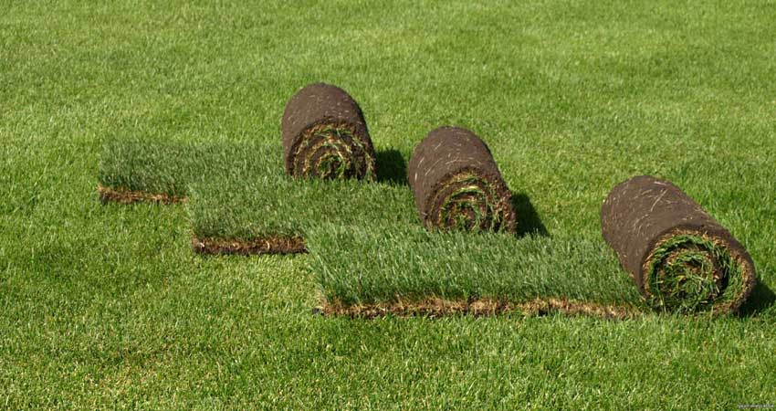 Преимущества и особенности эксплуатации рулонного газона