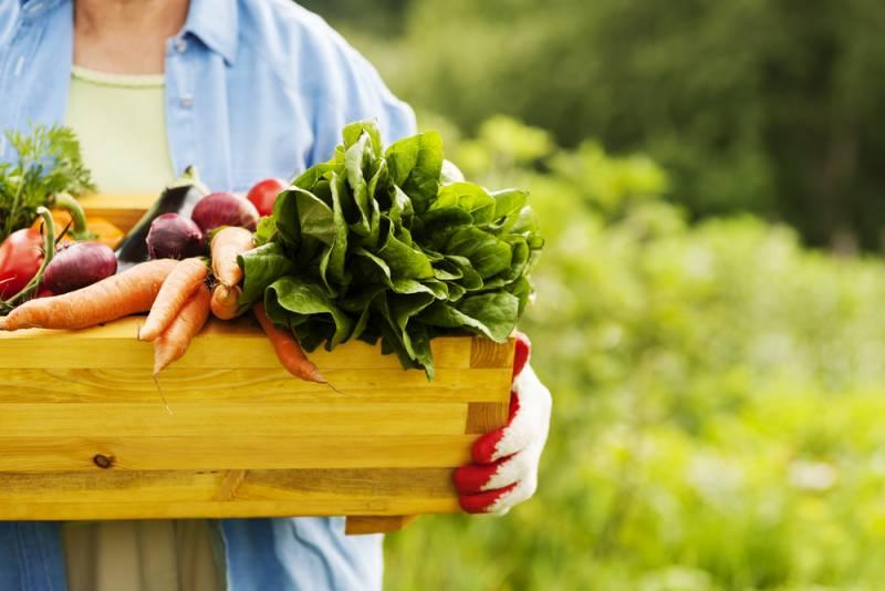 Секреты высоких урожаев огородных культур