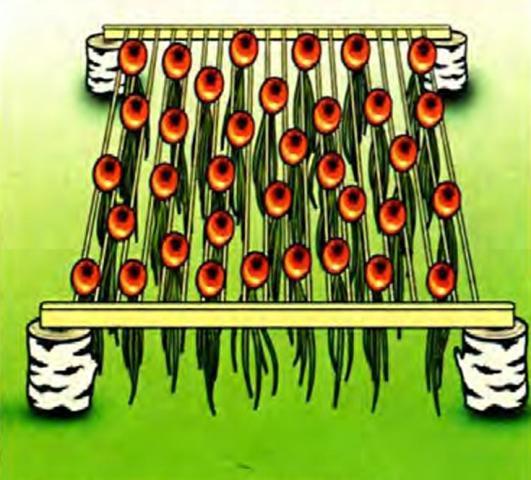 Такую сушилку можно использовать не только для лука, но и для просушки чеснока, гороха и фасоли(в стеблях)