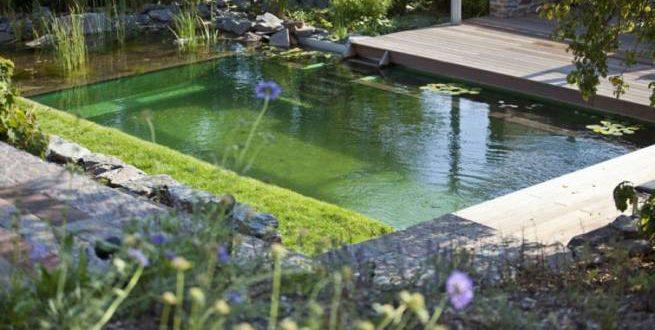 Целесообразность и особенности чистки природных и искусственных водоемов