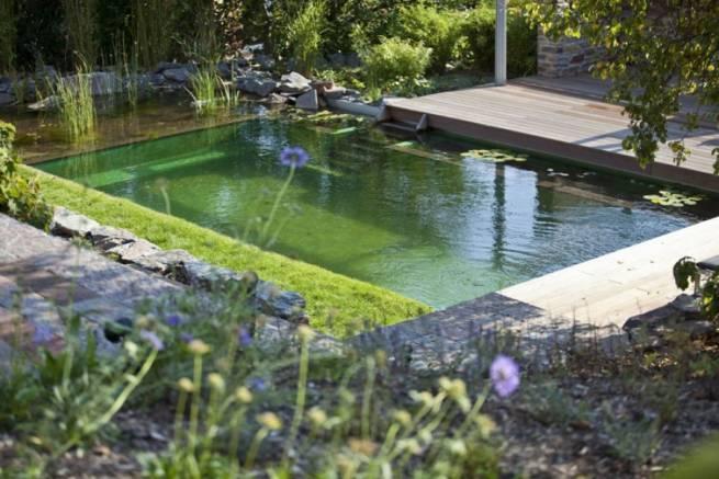 особенности чистки природных и искусственных водоемов
