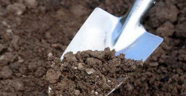 Как вылечить кислую почву
