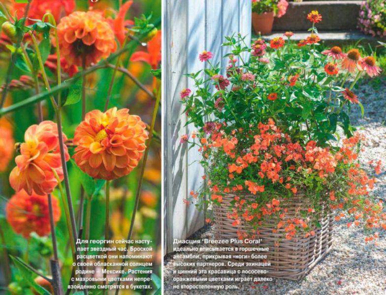 Оранжевые цветы для цветника