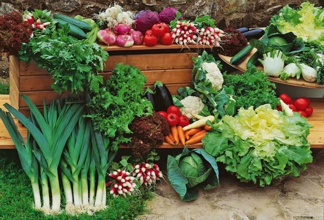 Правильное хранение семян – важный фактор получения большого урожая