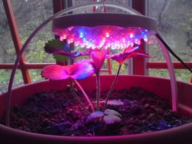 Светодиодные лампы для растений