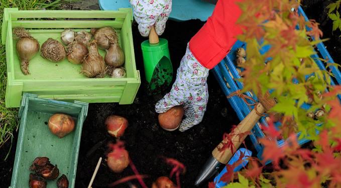 Осенняя посадка луковичных цветов: основные правила