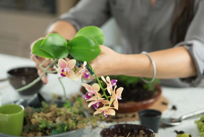 Как сделать субстрат для орхидей