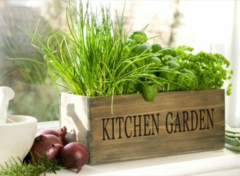 Выращивание зелени на подоконнике: полезный урожай в зимнее время года