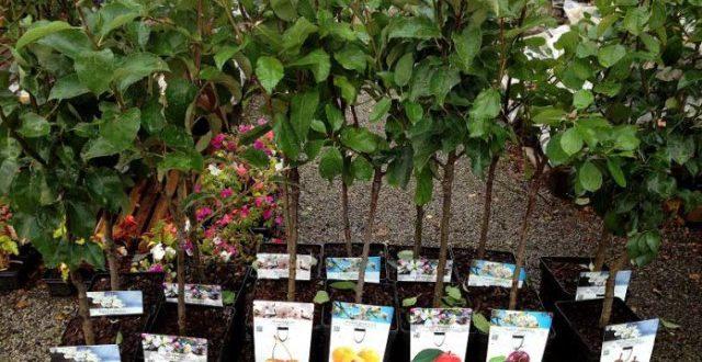Саженцы деревьев: выбираем правильно