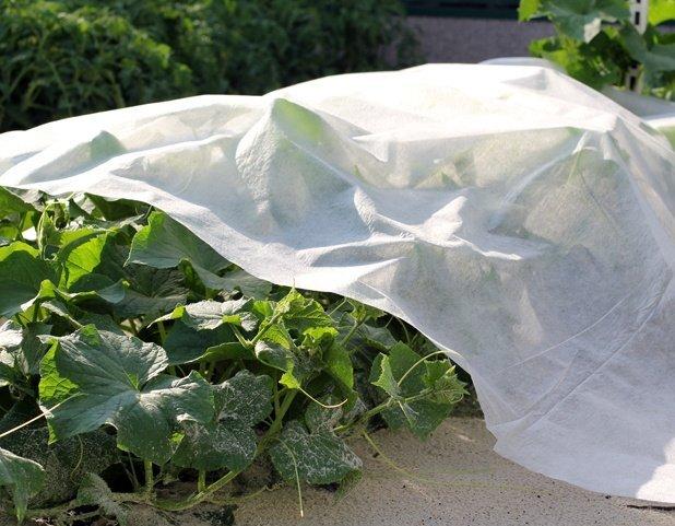 Какое выбрать агроволокно для огорода