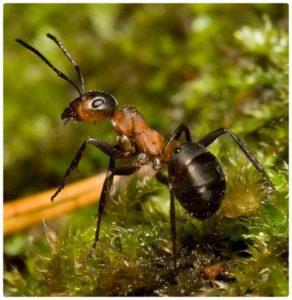 Как гарантированно избавиться от муравьёв на вашем огороде — лучшие народные средства