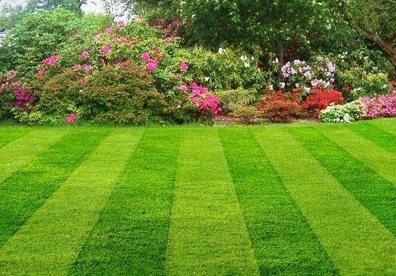 Правила выбора, покупки и укладки рулонного газона для оформления участка