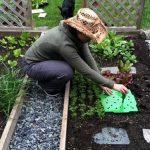 Удобрения для овощей: как запланировать урожай
