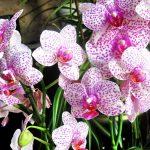 Как выбирать орхидеи?